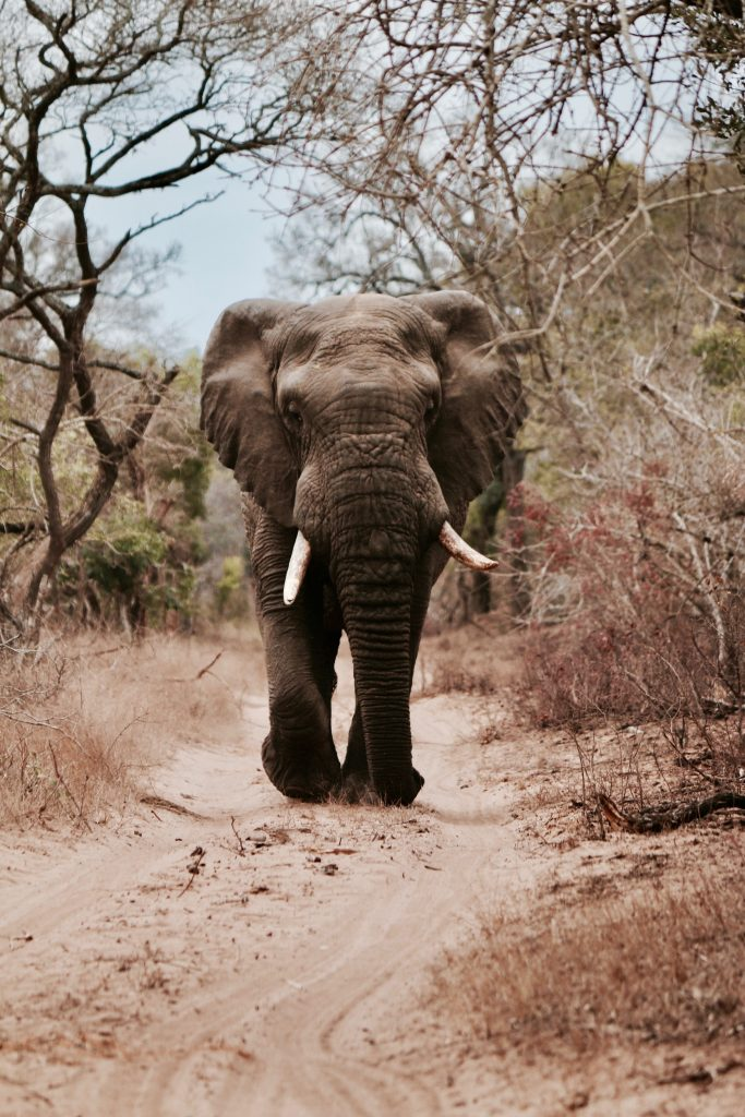 African Adventure travel for small groups