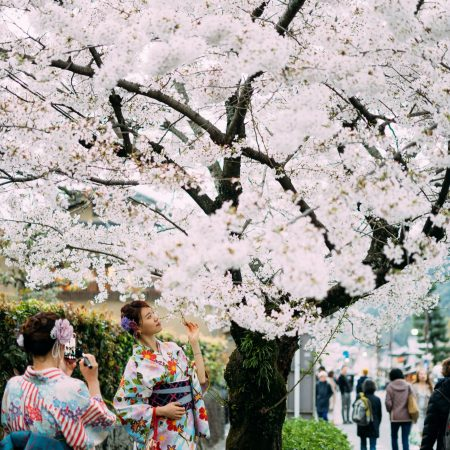 Join our small travel group exploring Japanese Cherry Blossoms
